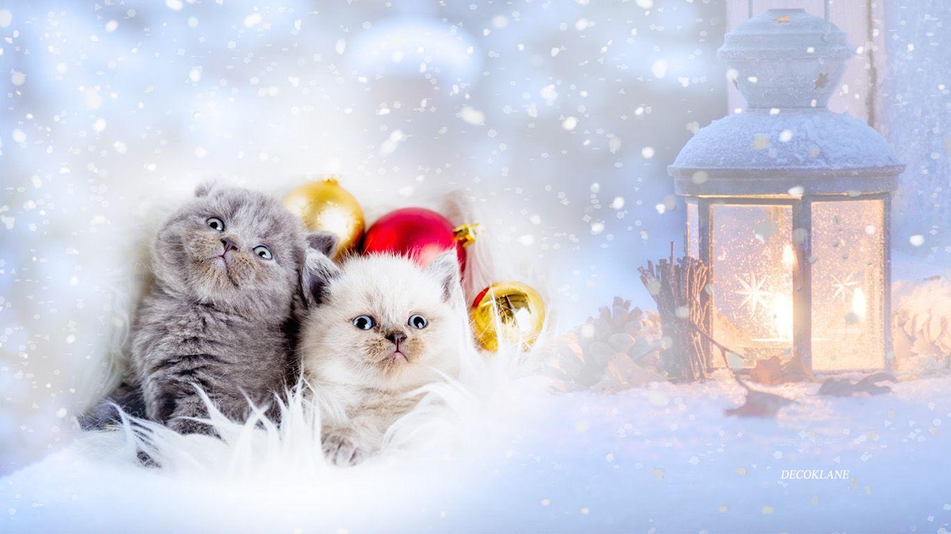 Fonds ecran automne hiver for Fond ecran gratuit hiver noel